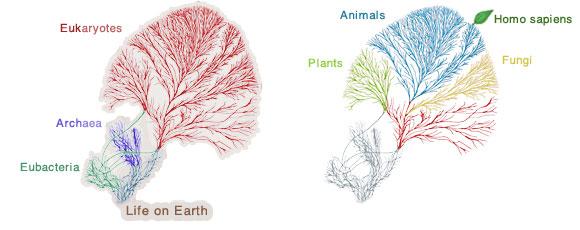 So You Think You KnowEvolution?